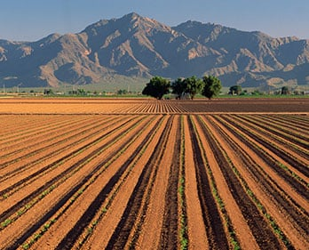 Miles of farmland creates food for millions, but it also produces large amounts of organic waste.